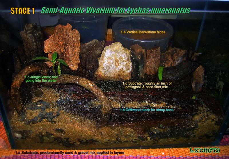 [HOW TO] Lychas mucronatus' Semi-Aquatic Communal Enclosure  LmAqStage1