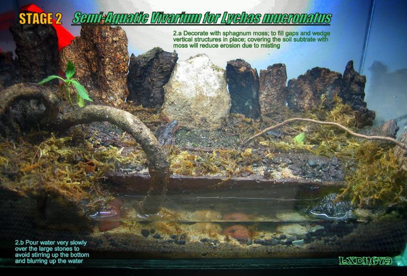 [HOW TO] Lychas mucronatus' Semi-Aquatic Communal Enclosure  LmAqStage2