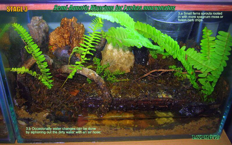 [HOW TO] Lychas mucronatus' Semi-Aquatic Communal Enclosure  LmAqStage3