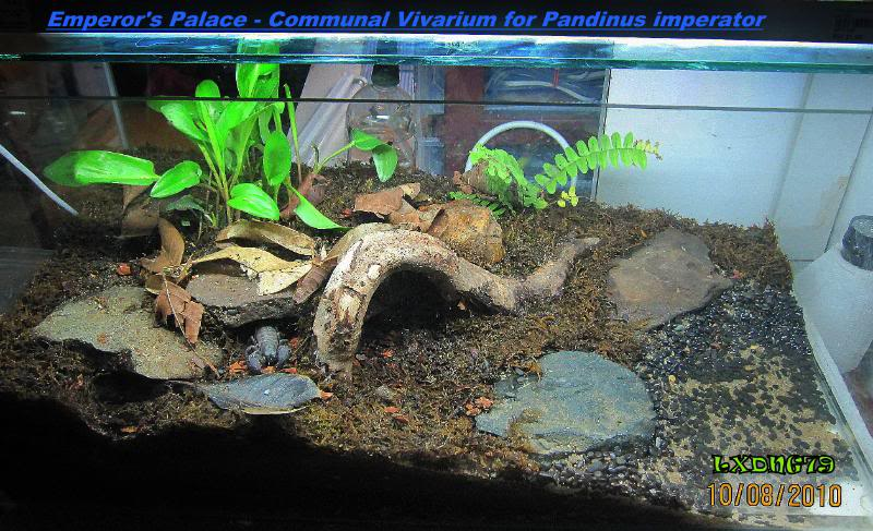 [HOW TO] Emulate a Natural-Looking Tropical Forest Scorpion Habitat EmpPalace