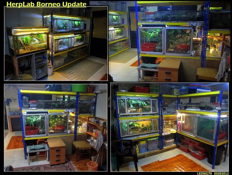 My Borneo Snake Collection - Page 3 HerplabUpdate_zpsbac2e08a