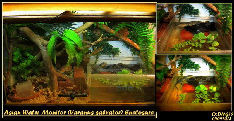 My Borneo Snake Collection - Page 3 Monitor_zpsd54aca5e