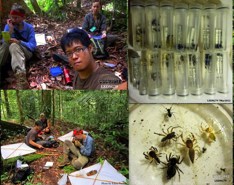 Mulu & Lambir Salticid Collecting Expedition  Blogpic1