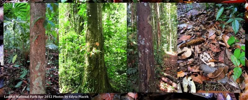 Mulu & Lambir Salticid Collecting Expedition  Blogpic13