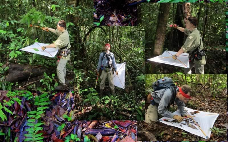 Mulu & Lambir Salticid Collecting Expedition  Blogpic4