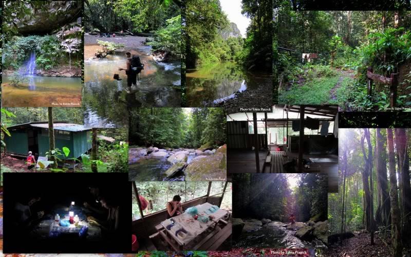 Mulu & Lambir Salticid Collecting Expedition  Blogpic8