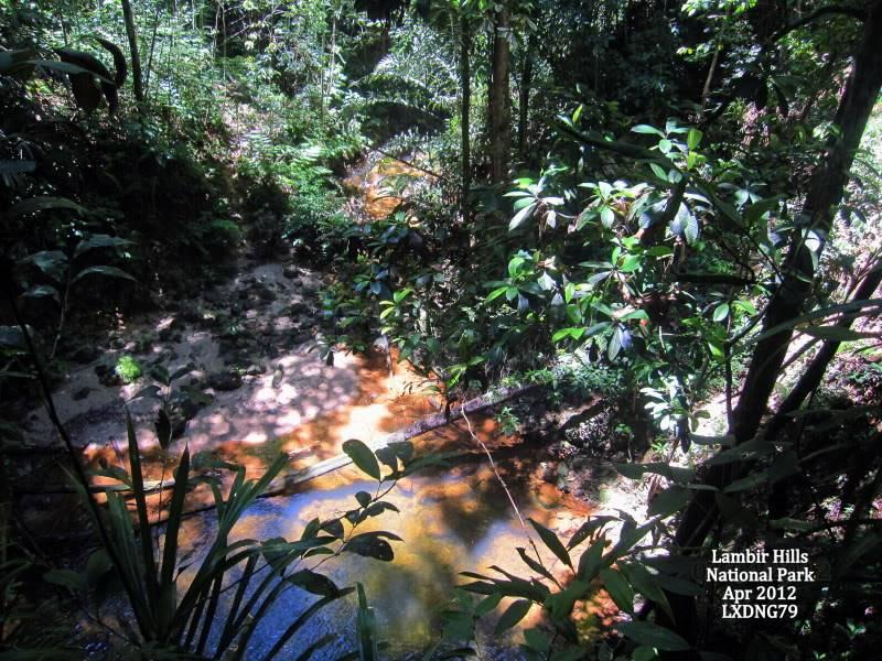 Mulu & Lambir Salticid Collecting Expedition  Waterfall2