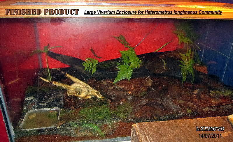 [HOW TO] Build a Large Scorpion Vivarium FinishedProduct2