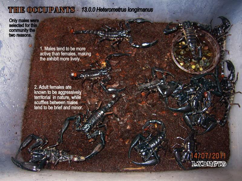 [HOW TO] Build a Large Scorpion Vivarium Longimass