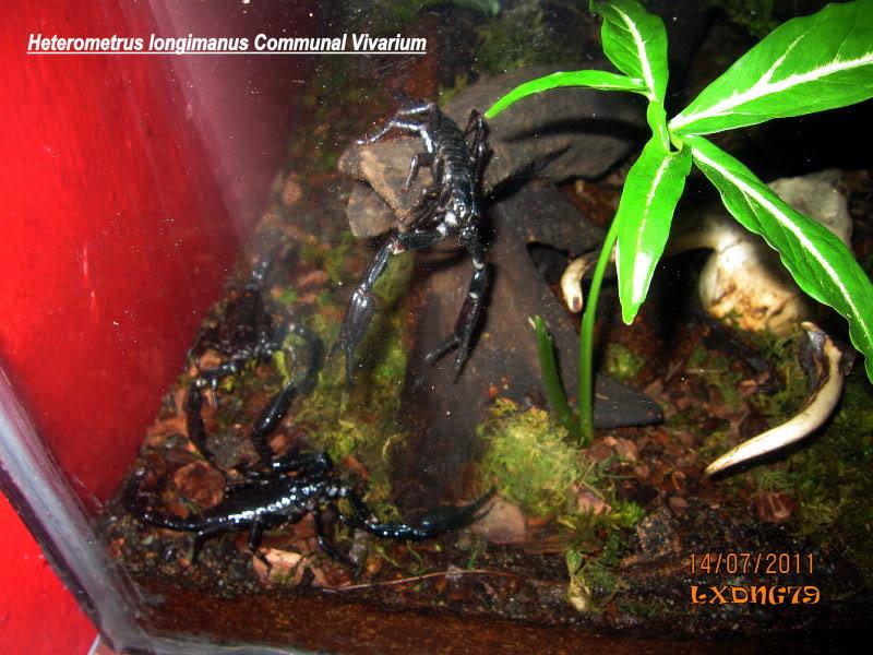[HOW TO] Build a Large Scorpion Vivarium Longiruai2