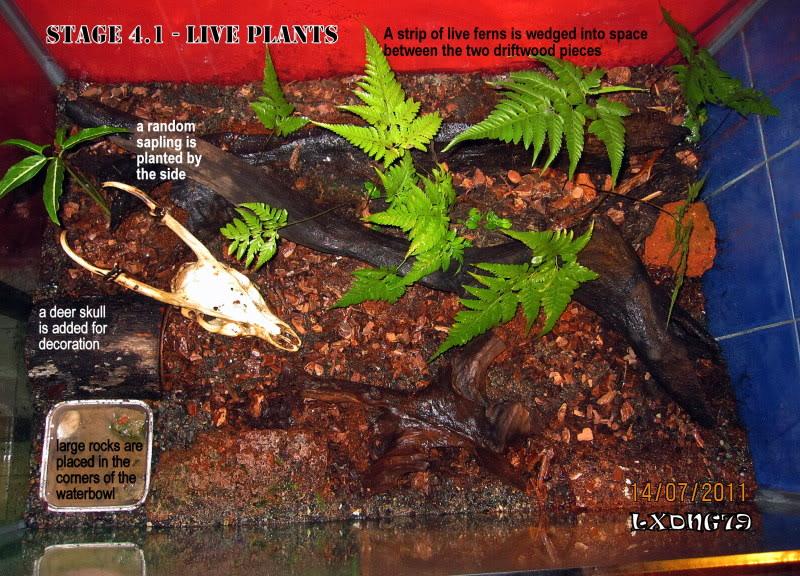 [HOW TO] Build a Large Scorpion Vivarium Stage41