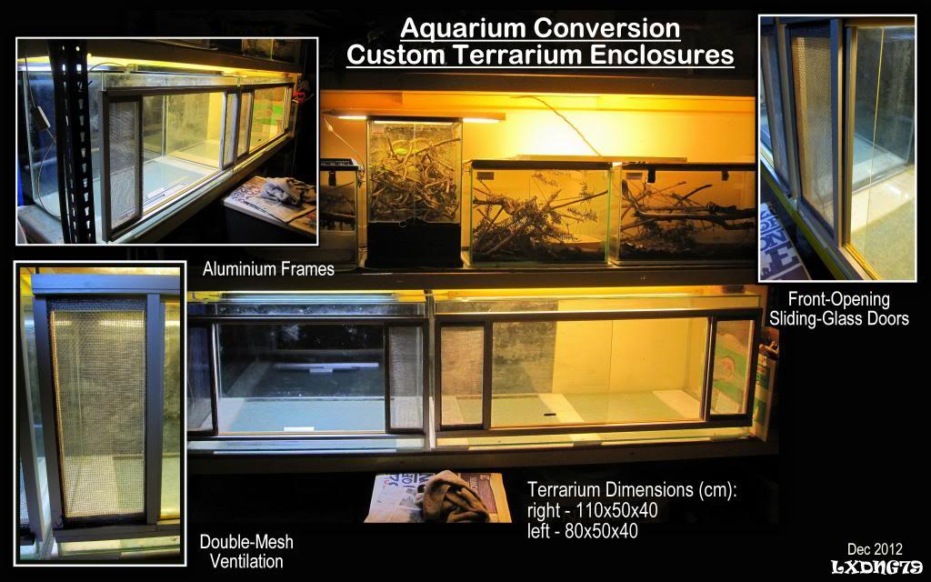 My Borneo Snake Collection Serpentariums