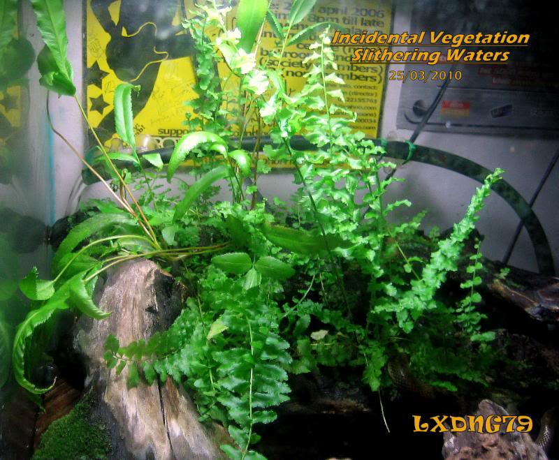 Miracle Grow Water Snake Tank Homejungle-1