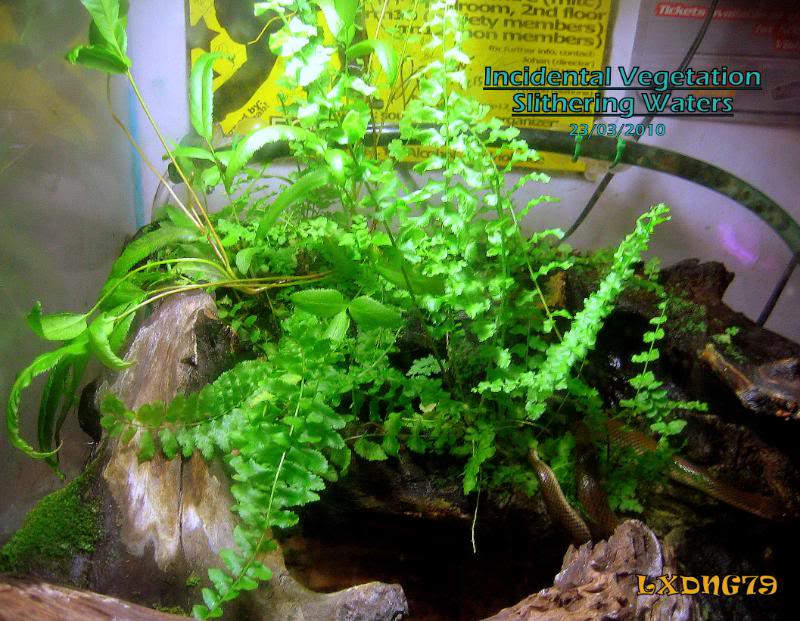 Miracle Grow Water Snake Tank Homejungle2-1