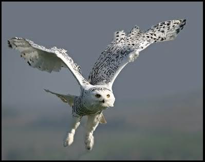 Dzīvnieku Veikals Owl