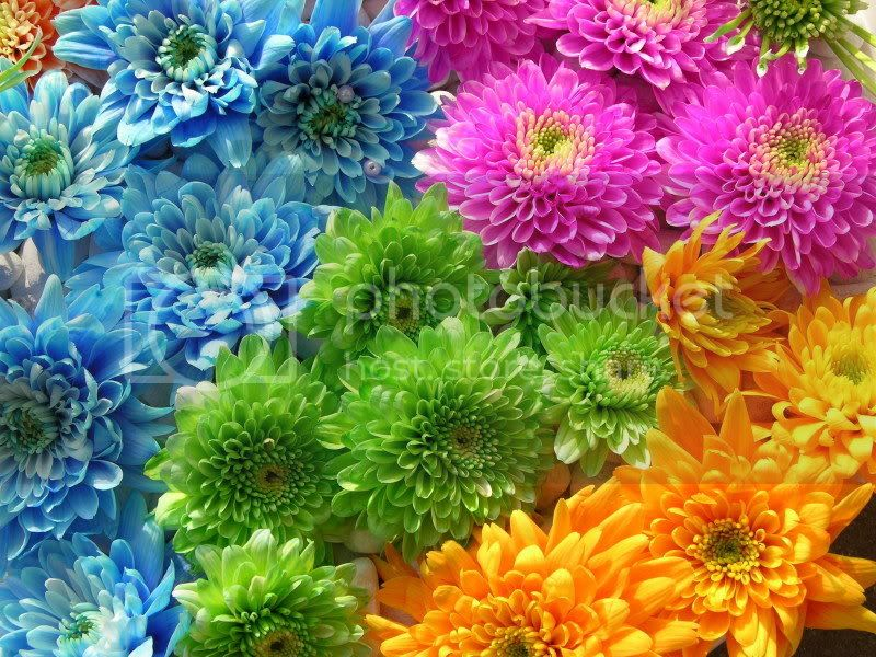 For Those Who Love Flowers For20those20who20Love20Flowers002