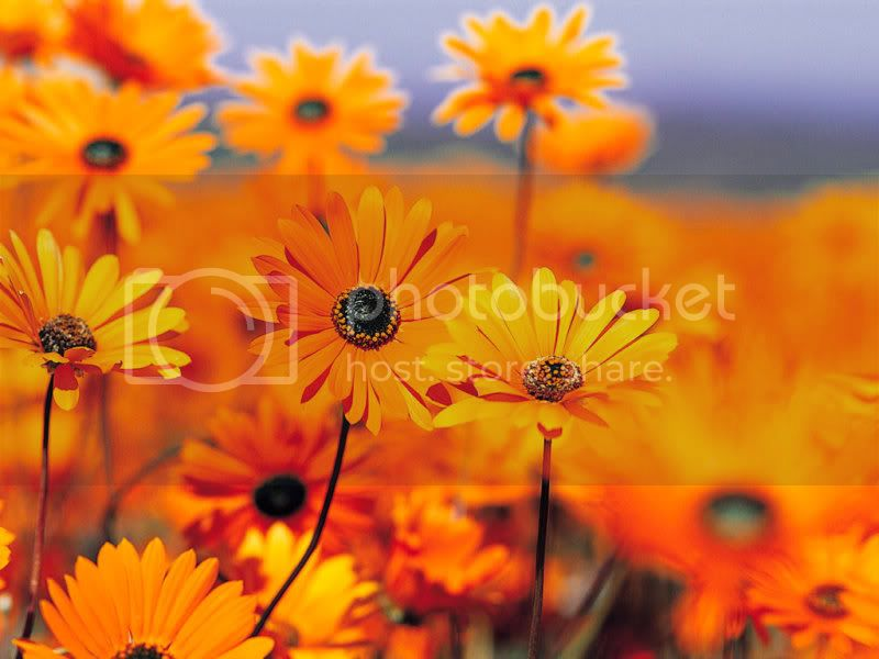 For Those Who Love Flowers For20those20who20Love20Flowers003