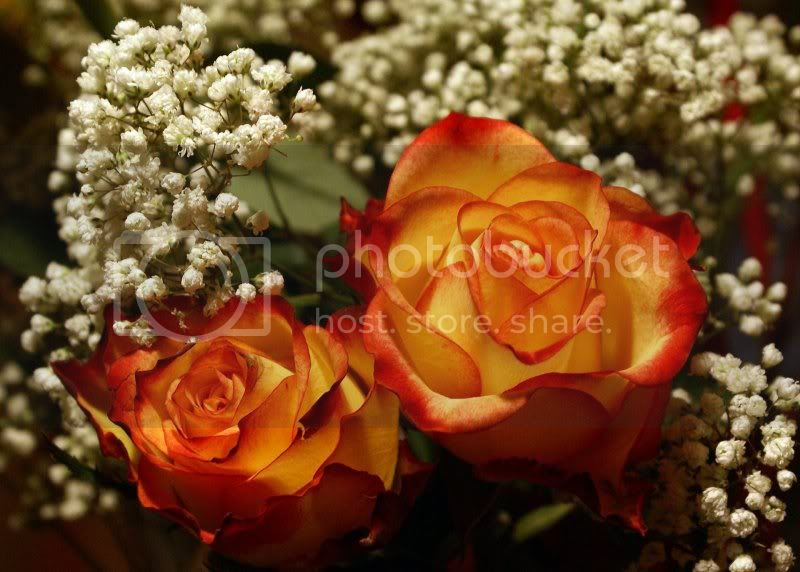 For Those Who Love Flowers For20those20who20Love20Flowers008