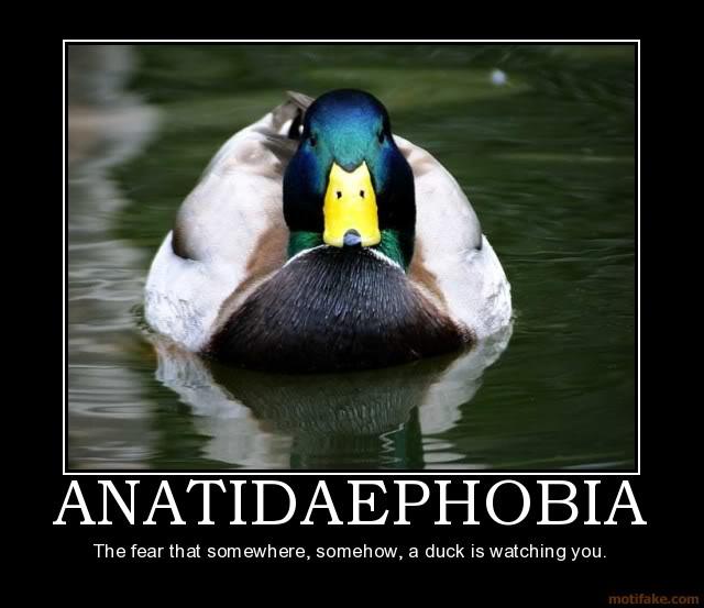Motivational Poster Anatidaephobia