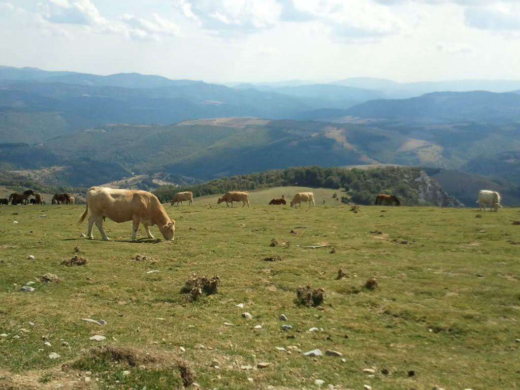 Vacaciones en Cantabria..fotos.. - Página 3 2011-09-23145436