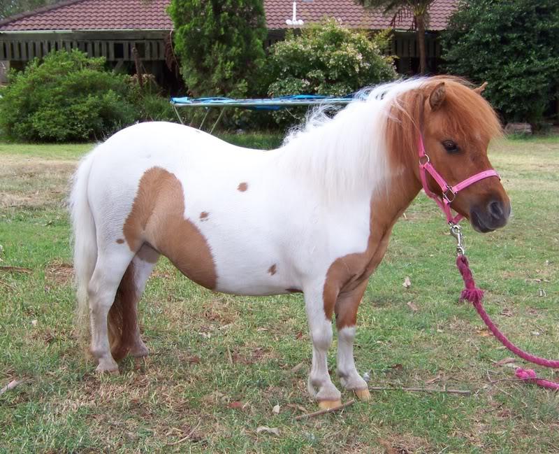 Fatty Pony.. Shaz