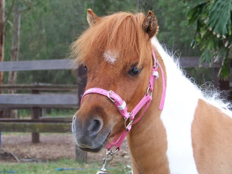 Fatty Pony.. Shaz1