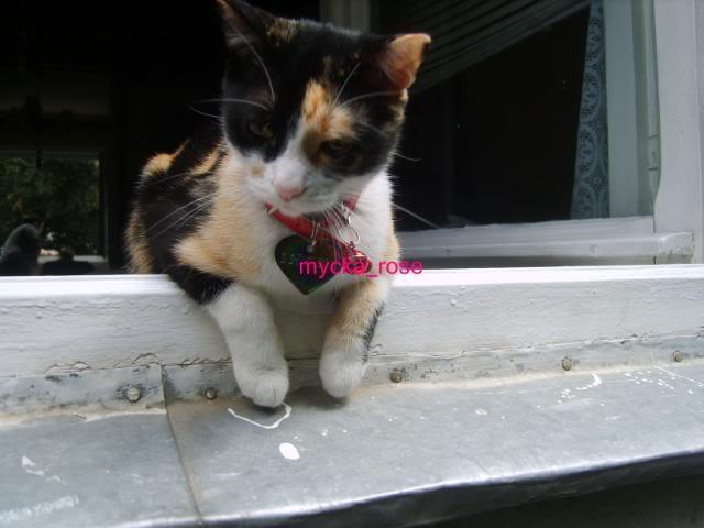 Shake - pisica noastra 434145ec