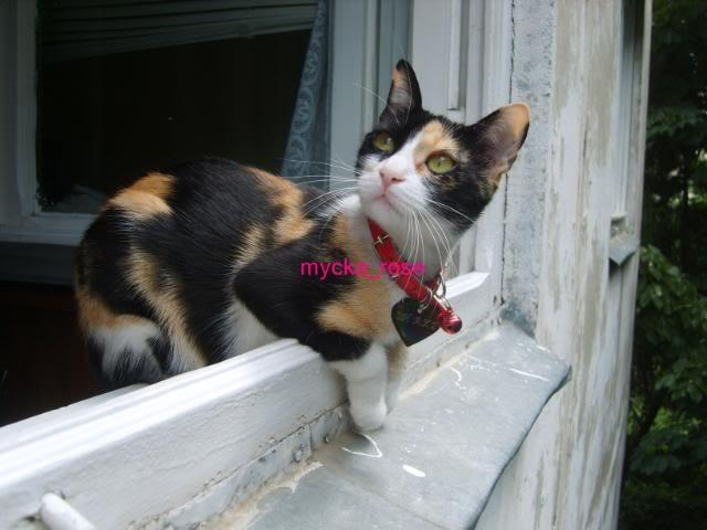 Shake - pisica noastra 9a8d5804