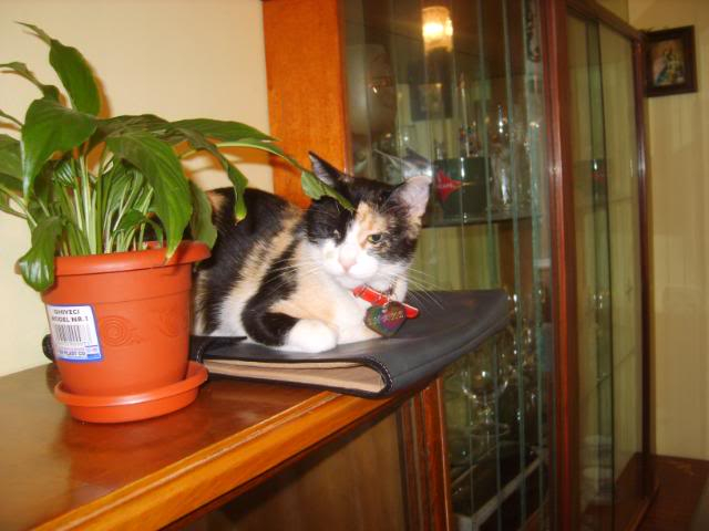 Shake - pisica noastra S8004425