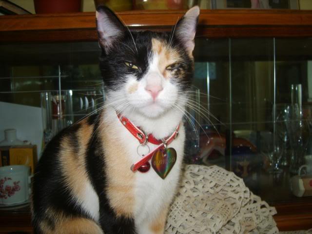Shake - pisica noastra S8004741