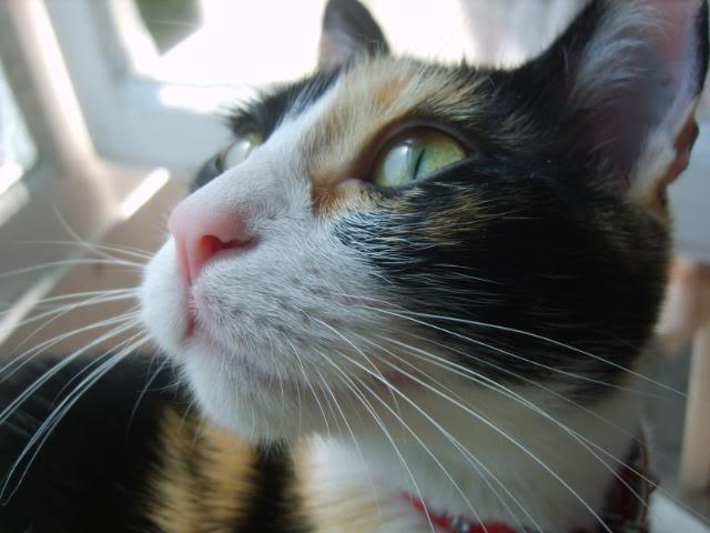 Shake - pisica noastra S8004748