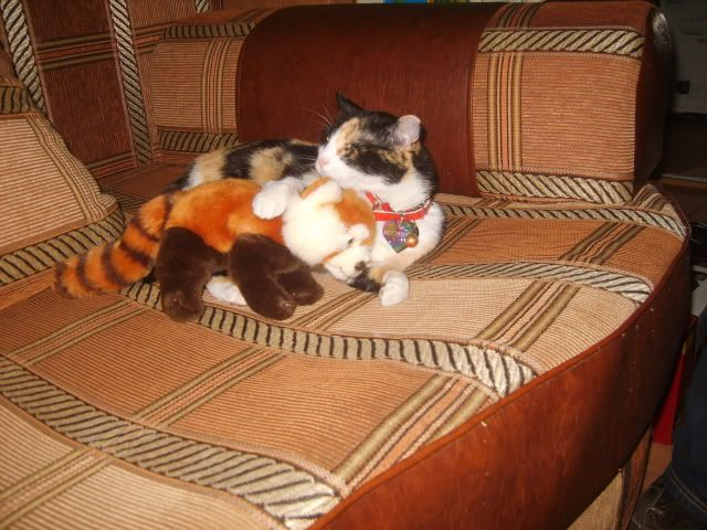 Shake - pisica noastra - Pagina 3 S8006281