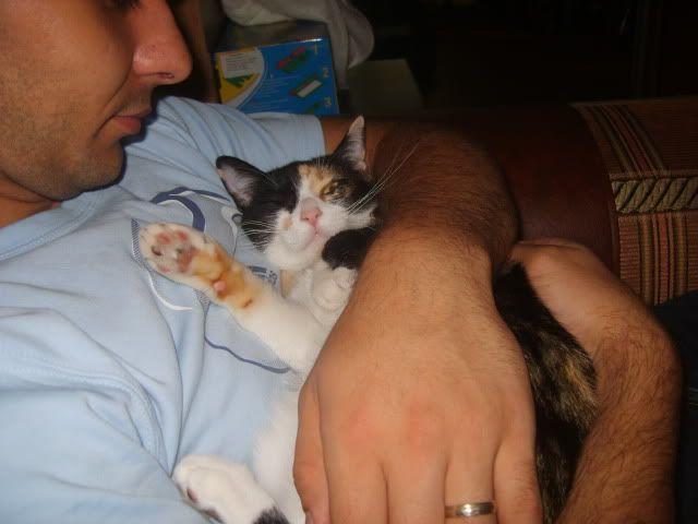 Shake - pisica noastra - Pagina 3 S8006287