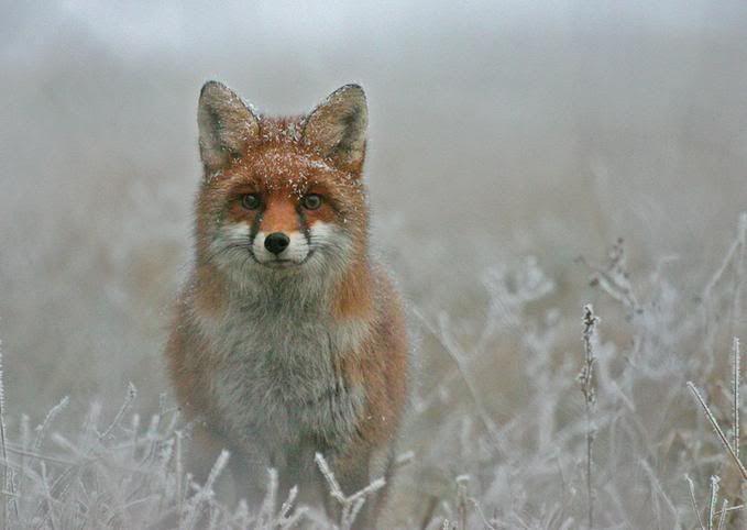 Foto nga bota e kafsheve dhe zogjve  - Faqe 2 NicePicsfromwwwmetacafecom19