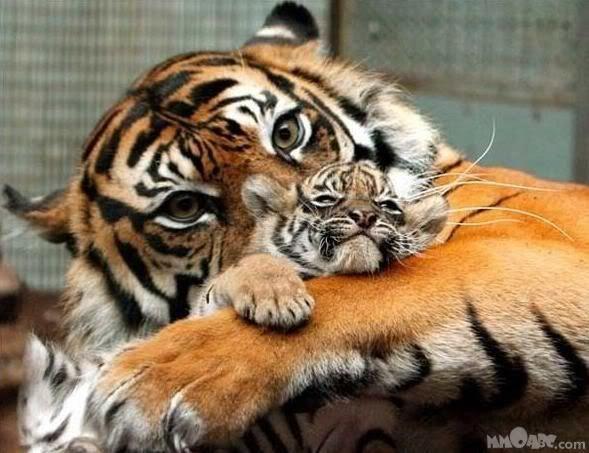 Foto nga bota e kafsheve dhe zogjve  - Faqe 2 NicePicsfromwwwmetacafecom27