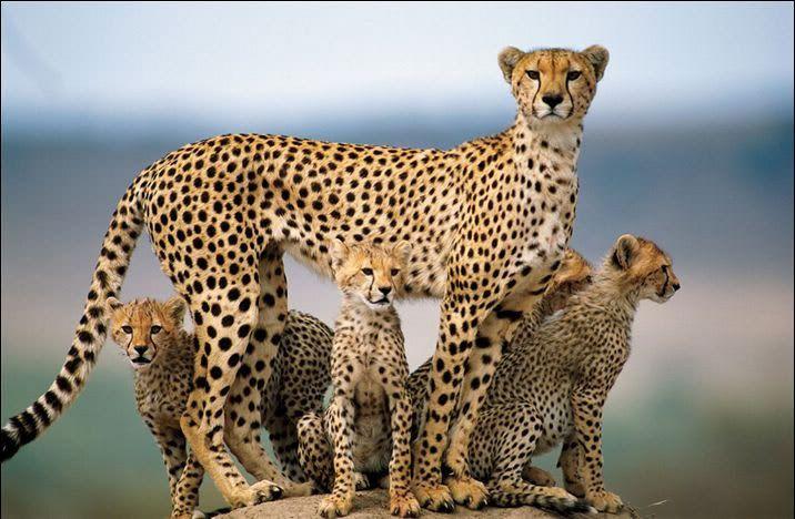 Foto nga bota e kafsheve dhe zogjve  - Faqe 2 NicePicsfromwwwmetacafecom31