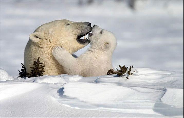 Foto nga bota e kafsheve dhe zogjve  - Faqe 2 NicePicsfromwwwmetacafecom32