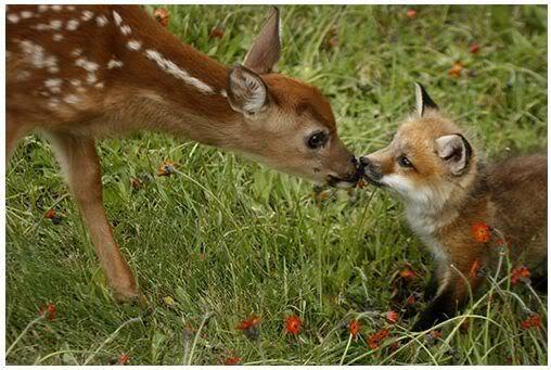 Foto nga bota e kafsheve dhe zogjve  - Faqe 2 NicePicsfromwwwmetacafecom37