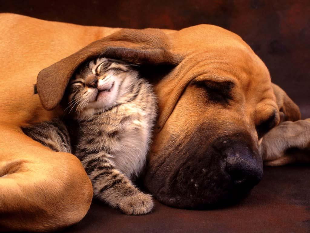 Volim te kao prijatelja, psst slika govori više od hiljadu reči - Page 3 Cat_and_Dog_-_the_Best_Friend314343