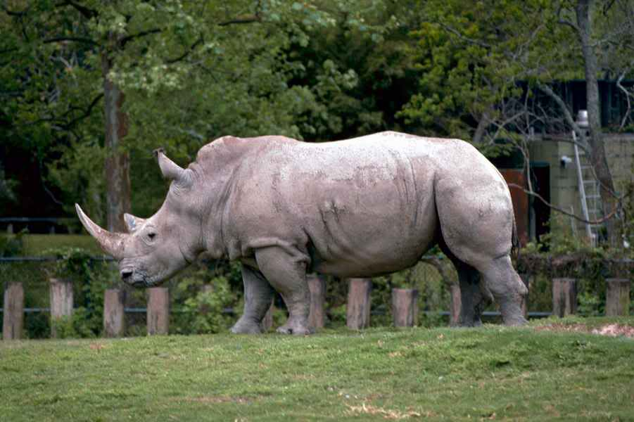 Presentatiohn: Mojo 2012 - white rhinoceros WhiteRhinos