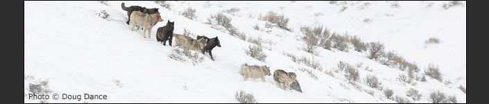 Yellowstone - Regler och Rikt 2-1