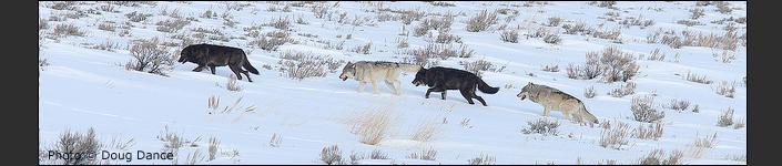 Yellowstone - Regler och Rikt 6-1