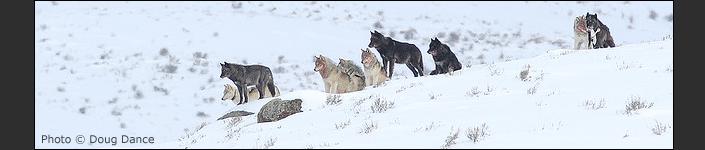 Yellowstone - Regler och Rikt 7-2
