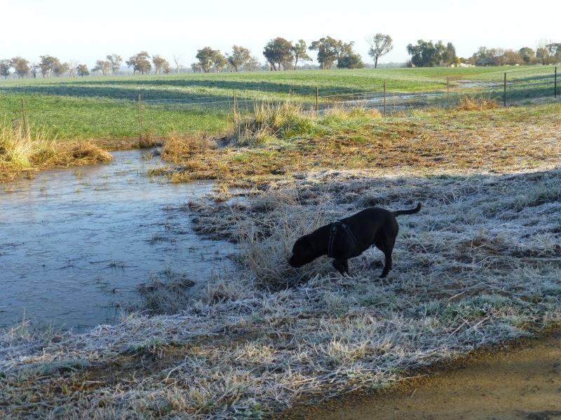 A bit frosty this morning P1010942_zpswymhwgta