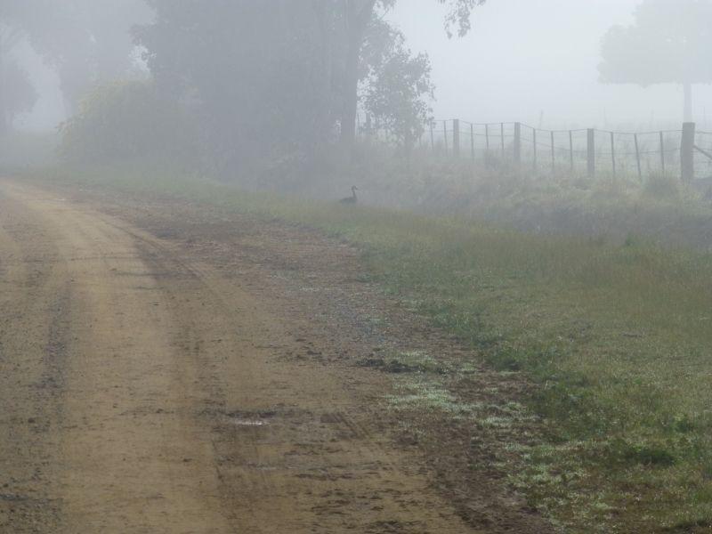 Another foggy morning trudge P1010956_zpsju2wcxsz
