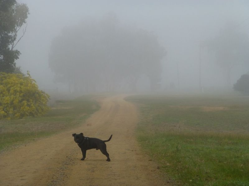 Another foggy morning trudge P1010980_zpsfnhuqyet