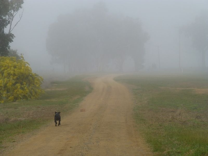 Another foggy morning trudge P1010982_zpsurjrahd6