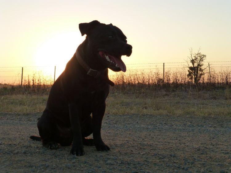 Evening walk at sunset B28bf363-4ac7-4fef-8dff-fc758ff30f8f_zps9fd01708