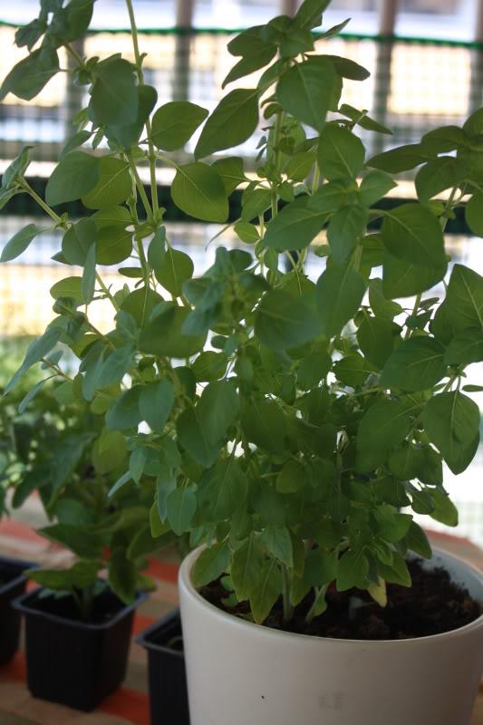 Gradina de legume! 017-22