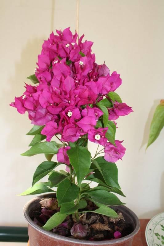Florile din apartament 11087